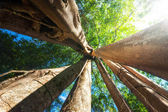 Sunny rainforest with giant banyan tree — Stock Photo
