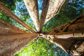 Rainforest with giant banyan tropical tree — Stock Photo