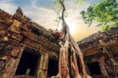 Ta Prohm temple with giant banyan tree — Stock Photo