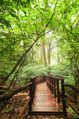 Jungle landscape in vintage style. Wooden bridge at tropical rai — Stock Photo