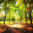 Sunny day at autumn park with colorful trees and pathway — Stock Photo #54828549