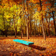 Sunny day in outdoor park with colorful autumn trees and bench — Stock Photo #54828565