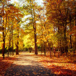 Sunny day at autumn park with colorful trees and pathway — Stock Photo #54828579