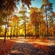Sunny day at autumn park with colorful trees and pathway — Foto Stock #54828667