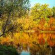 Sunny day in outdoor park with autumn trees reflection — Stock Photo #54828737