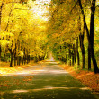 Sunny day at autumn park with colorful trees and pathway — Stock Photo #54828759