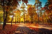 Sunny day at autumn park with colorful trees and pathway — Foto Stock