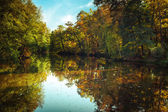 Sunny day in outdoor park with autumn trees reflection  — Stock Photo