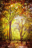 Sunny day in autumn park with colorful trees — Stock Photo