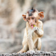 Long tailed macaque monkeys — Stock Photo #58249259
