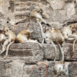 Long tailed macaque monkeys — Stock Photo #58249261