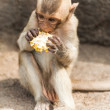 Long tailed macaque monkeys — Stock Photo #58249265