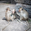 Long tailed macaque monkeys — Stock Photo #58249301