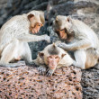 Long tailed macaque monkeys — Stock Photo #58249315