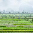 Vietnamese farmer working at rice field. — Stock Photo #58253517