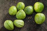 Organic oriental melons — Стоковое фото