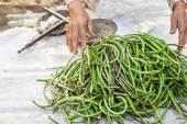 Organic yard long beans — Stock Photo