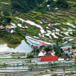 Village houses near rice terraces fields. Amazing abstract texture with sky colorful reflection in water. Ifugao province. Banaue, Philippines UNESCO heritage — Stock Photo #72675817