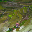 Village houses near rice terraces fields. Amazing abstract textu — Stock Photo #72675831