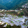 Village houses near rice terraces fields. Amazing abstract textu — Stock Photo #72675851