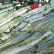 Village houses near rice terraces fields. Amazing abstract textu — Stock Photo #76926527