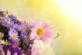 Flowers background — Foto de Stock