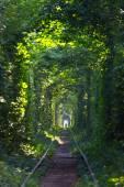 Tunnel av kärlek — Stockfoto