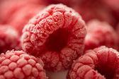 Frambuesas congeladas — Foto de Stock