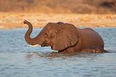 Slon ve vodě — Stock fotografie