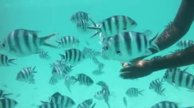 Feeding coral reef fishes — Stock Video