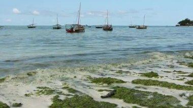 Zanzibar dhows — Stock Video