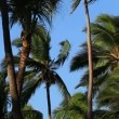 Palm trees in wind — Stock Video #59150003