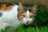 Adorable cat portrait — Stock Photo
