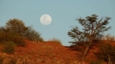 Kalahari moon landscape — Stock Video
