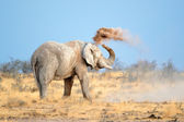 African elephant in dust — Stock Photo