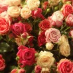 Multicolor roses bouquet — Stock Photo #64400133