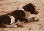 Dog sitting on the beach — Stock Photo