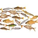 Composite freshwater fish — Stock Photo #55496103