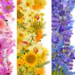 Strips from flowers — Stock Photo #55497325