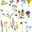 Spring wildflowers — Stock Photo #55497395