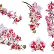 Orchid flowers — Stock Photo #55499711
