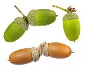 Set of acorns — Foto de Stock