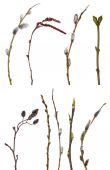 Collection of spring tree  branches — Foto de Stock
