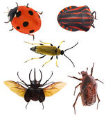 Bugs collection — Stock Photo