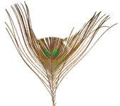 Pena de pavão — Fotografia Stock