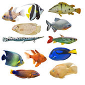 Set of  fishes — Stock Photo