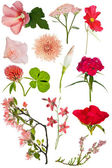 Red color flowers — Stock Photo