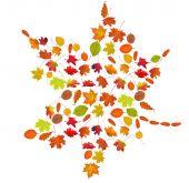 Fall maple leaf — Stock Photo
