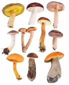 Ten edible mushrooms — Zdjęcie stockowe