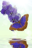 Blue butterfly and orchid — 图库照片